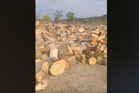 """Photo of ,,ასე იჩეხება და ნადგურდება ტყეები კახეთში – ეს არის ერთი სოფლის მიმდებარე ტერიტორია"""""""
