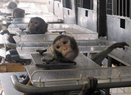 Photo of კოსმეტიკური ნაწარმისთვის ჩატარებული ცდები ცხოველებზე და სასტიკი მოპყრობის ამსახველი ვიდეო კადრები