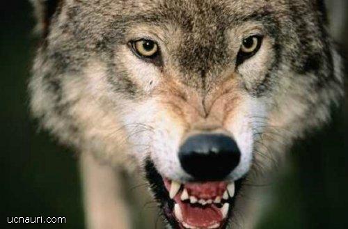 """Photo of ,,რა უნდა გავაკეთოთ იმისთვის, რომ ადამიანი ადამიანისთვის მგელი არ იყოს…"""""""