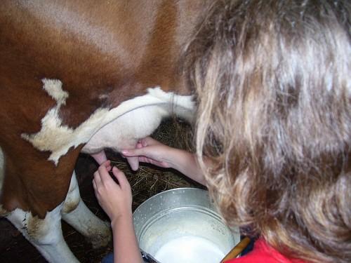 Photo of როგორ ამოვიცნოთ ნატურალური რძე _ უტყუარი წესები რძის მომხმარებლებისთვის!