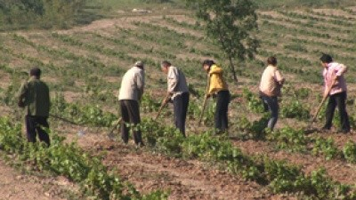 Photo of ადამიანები, რომლებიც მუშაობდნენ კერძო პირებთან, სახელმწიფო დახმარებას ვერ მიიღებენ